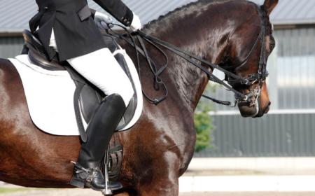 rhinopneumonie du cheval