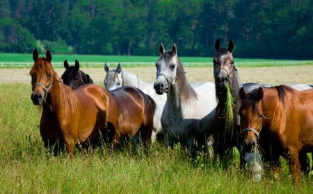 L'herbe pour le cheval
