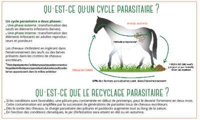 le cycle parasitaire du cheval avec BOEHRINGER INGELHEIM