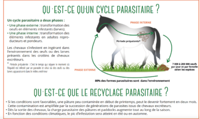 cycle parasitaire du cheval