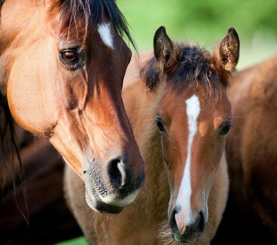 vermifuge d'été pour le cheval