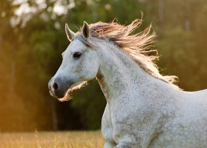 Bienfaits des plantes pour les chevaux