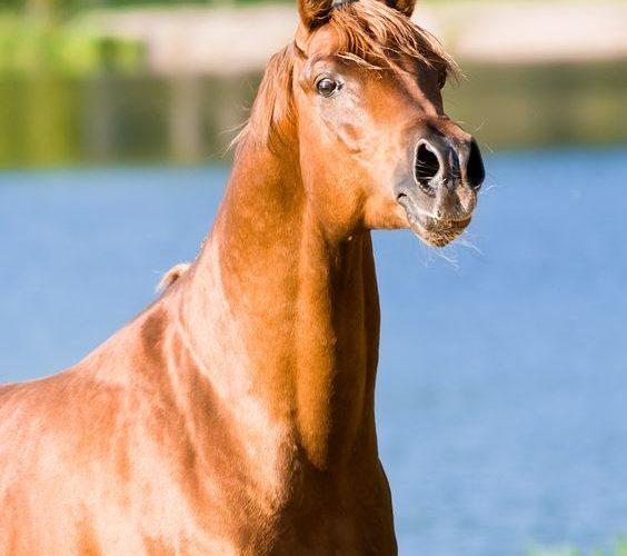les formations des métiers du cheval