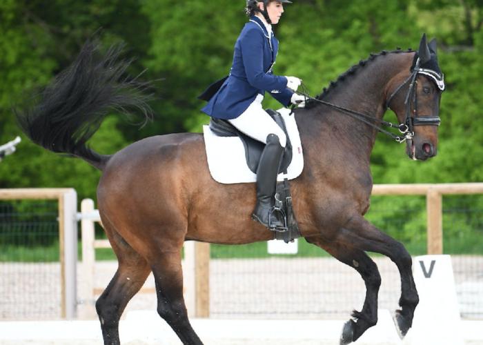 compléments du cheval sans mélasse