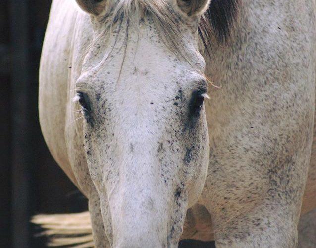 La dépression du cheval