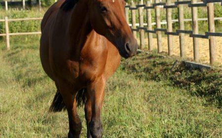 le bien être du cheval au pré