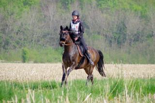 l'endurance équestre