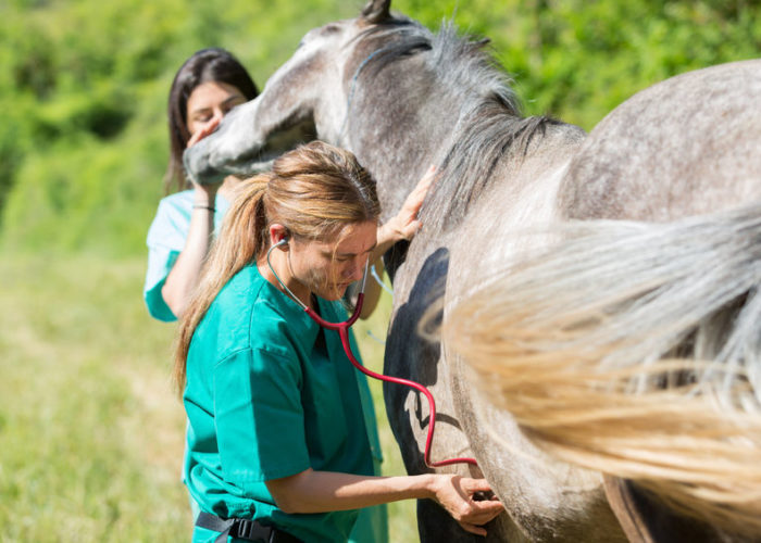 visite-d-achat-cheval