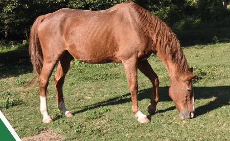 le-cheval-senior