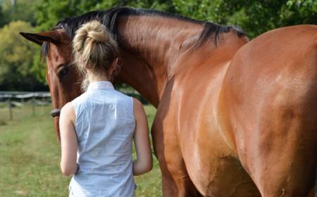 acheter-un-cheval