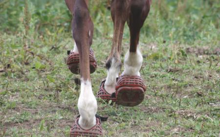 hipposandales pour le cheval