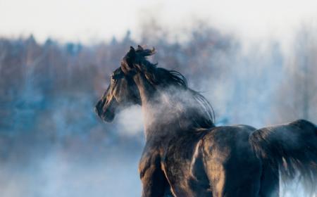 le cheval est le froid