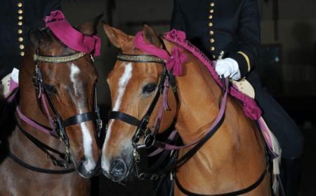 les chevaux du cadre noir