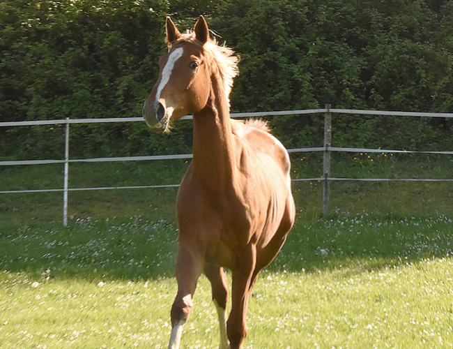 le cheval en manque d'état