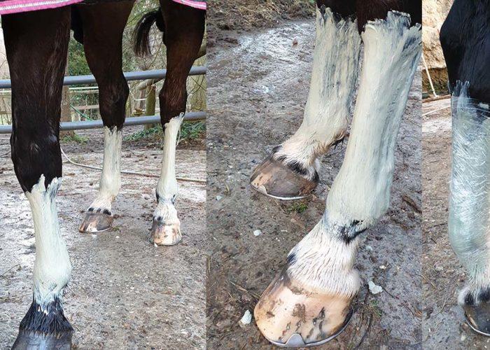 L'argile et le cheval