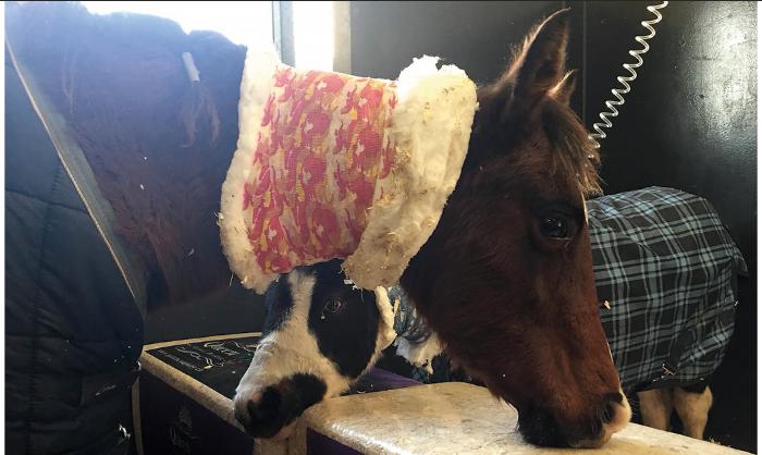 Le cheval et la myopathie