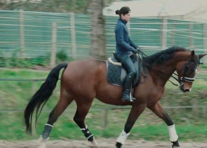 L'épaule en dedans du cheval
