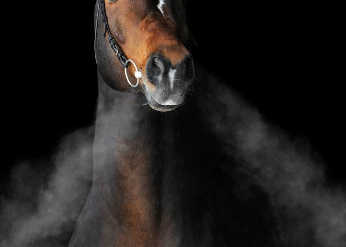 Photo de Shutterstock Boehringer