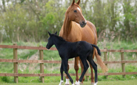 L'AFCE nous conseille pour acheter un cheval