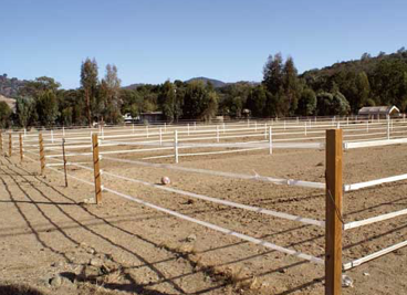 la couleur blanche pour les rubans de clôtures cheval