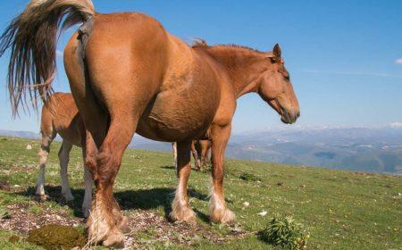 La diarrhée chez le cheval