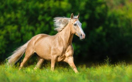 Les démangeaisons de la crinière du cheval