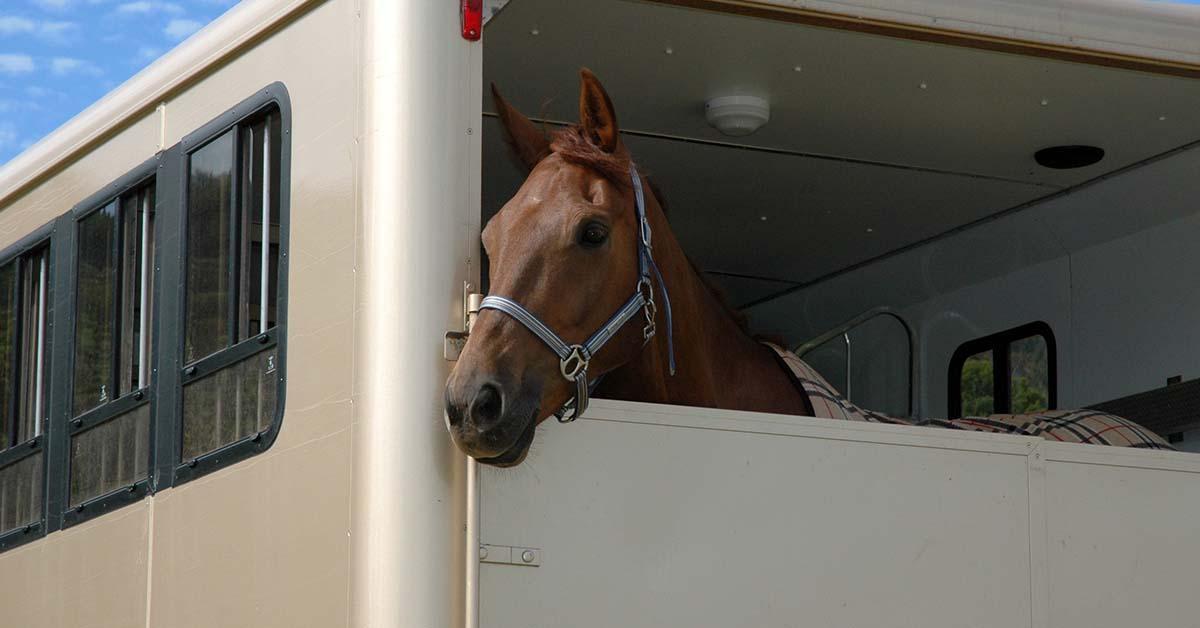 brexit-transport-cheval