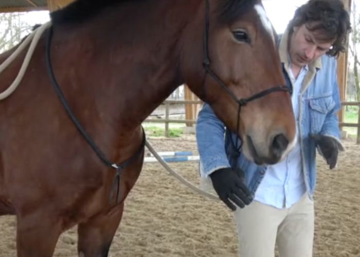 Faire céder la tête du cheval