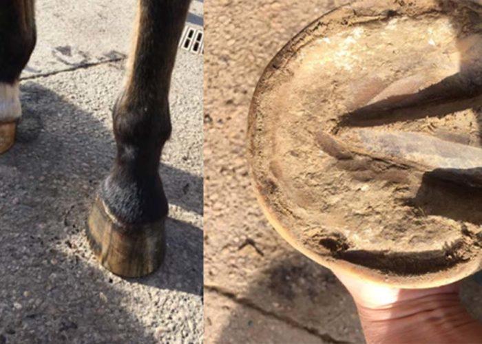 Michel vaillant équitation