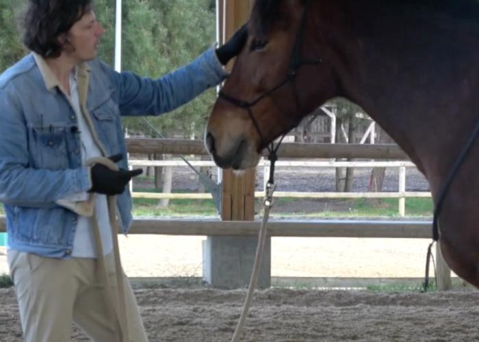 Renaud Subra et la mise sur le cercle du cheval
