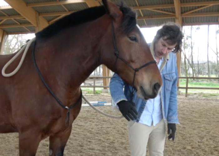 Renaud Subra et comment faire céder la tête du cheval