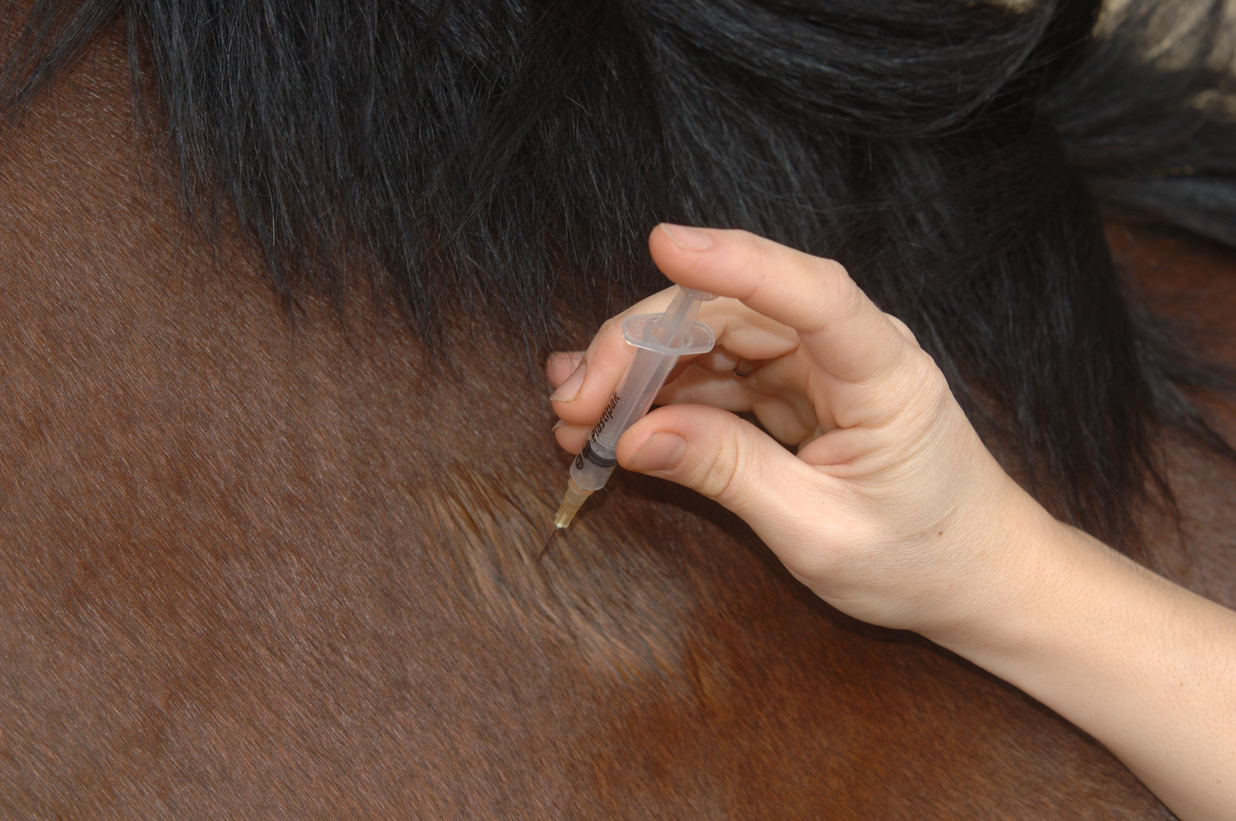 La vaccination du cheval Laurioux
