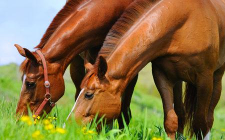 vermifugation-chevaux-printemps