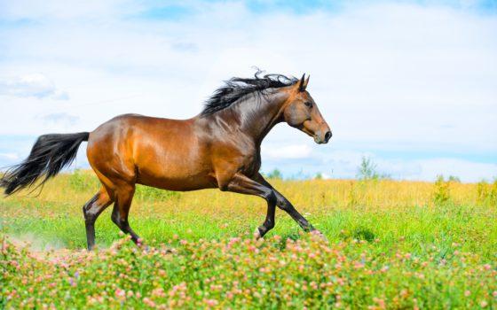 thérapie-cellulaire-cheval