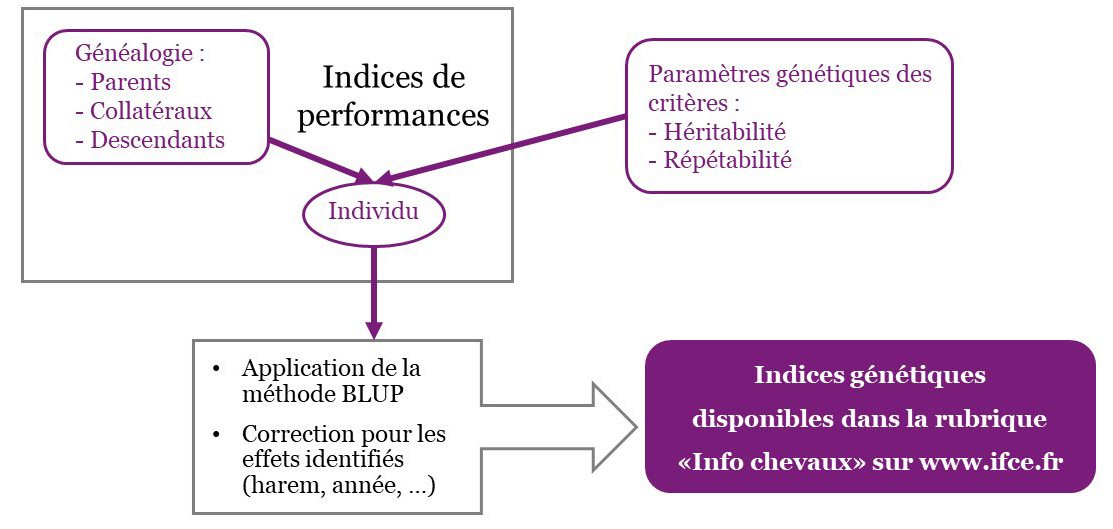 de-la-valeur-genetique-IFCE
