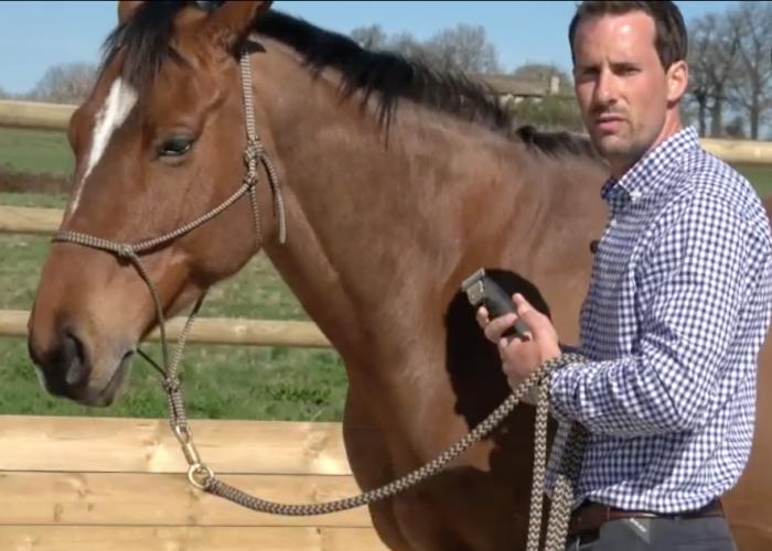 Comment désensibiliser son cheval à la tondeuse