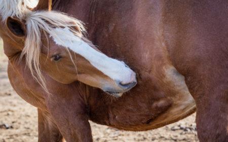 bienfaits des probiotiques pour le cheval
