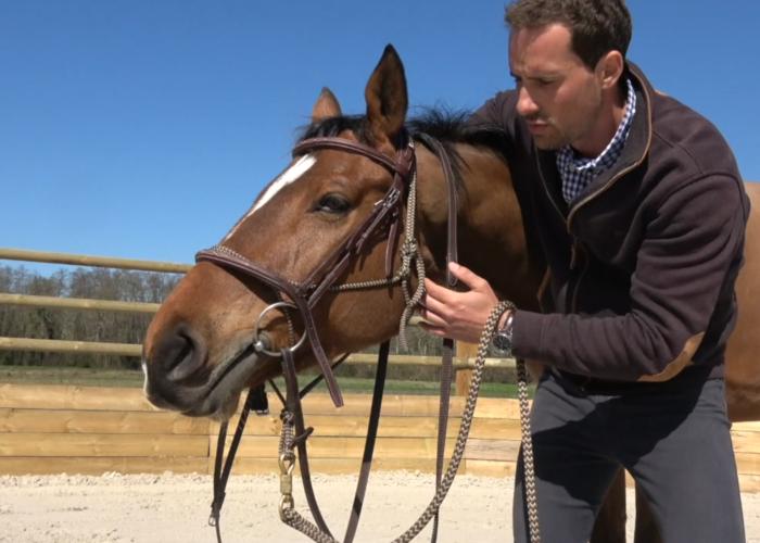 Comment mettre le filet au cheval