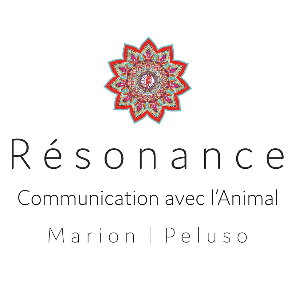 RESONANCE COMMUNICATION ANIMALE