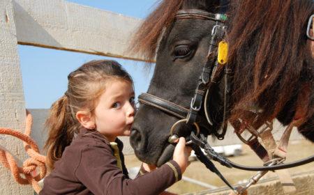 Le poney et la FFE