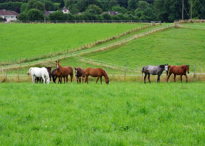 Comment bien valoriser l'herbe pour le cheval ?