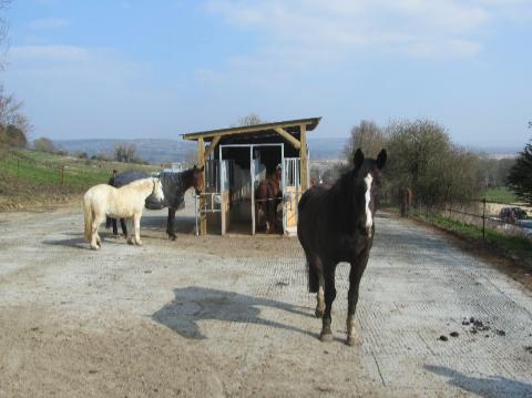 Qu'est ce qu'une écurie active pour le cheval ?