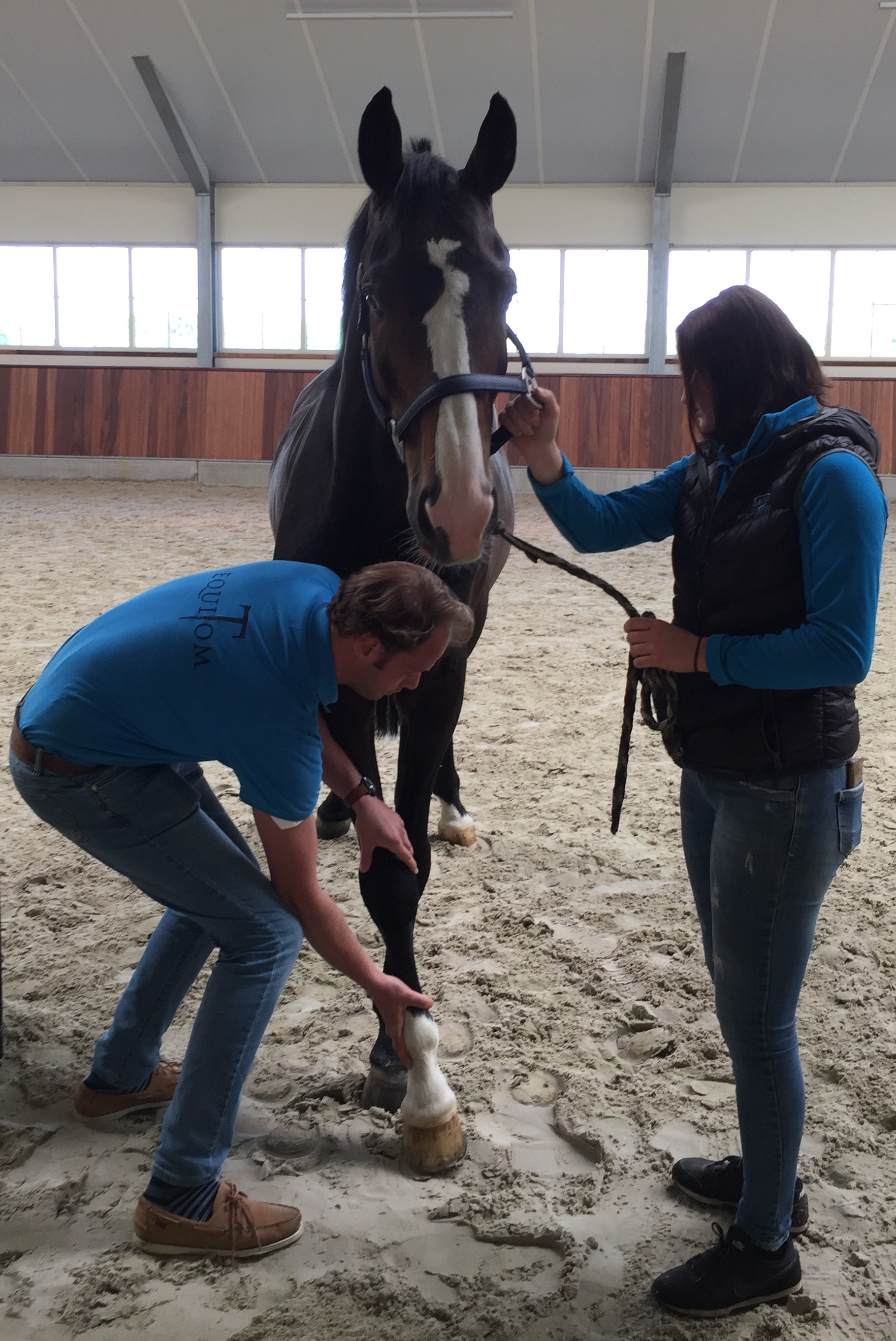 Le test neurologique du cheval
