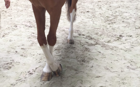 Le test neurologique chez le cheval avec le croisement des membres