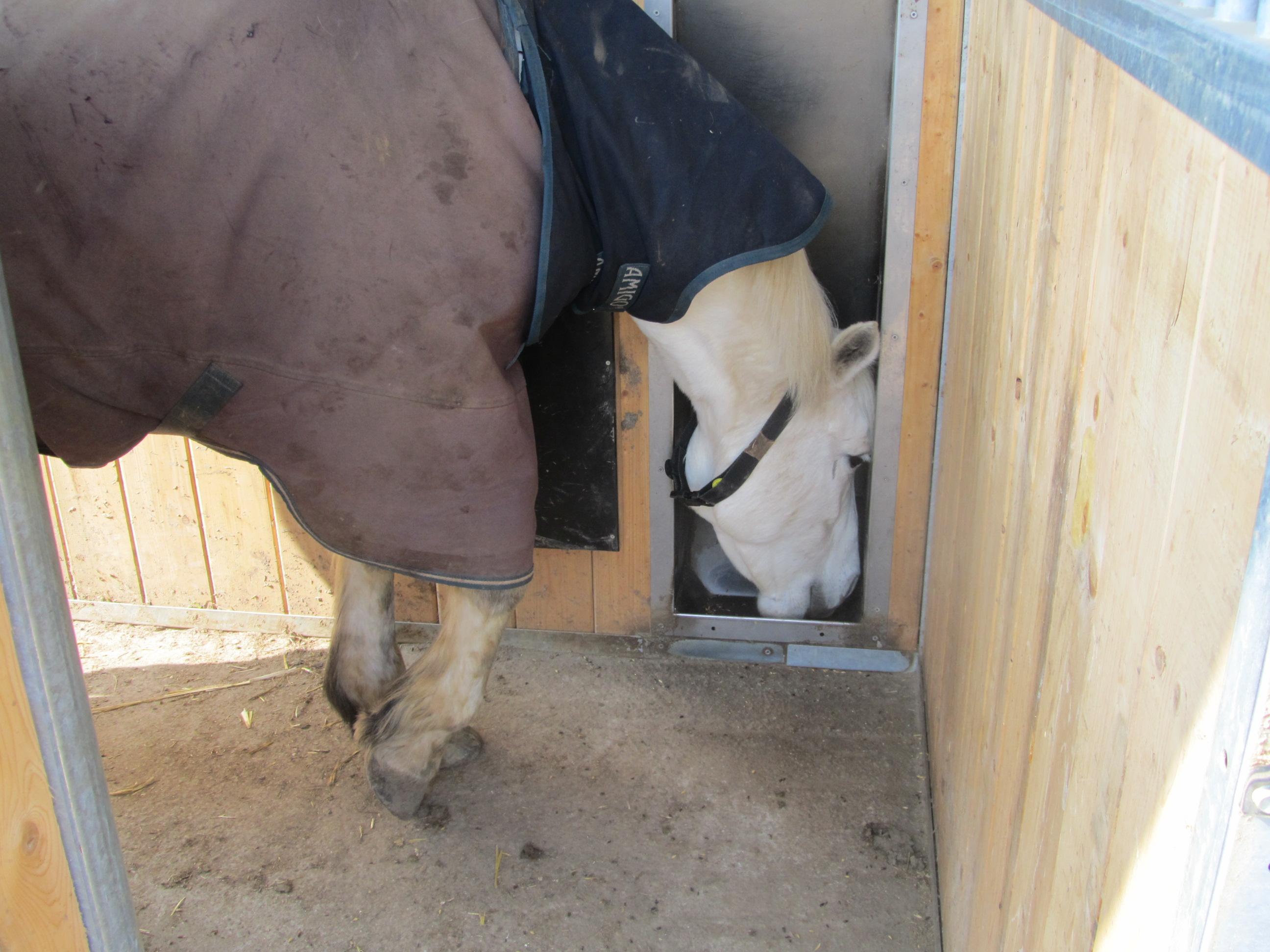 La puce électronique pour le cheval pour la distribution des aliments