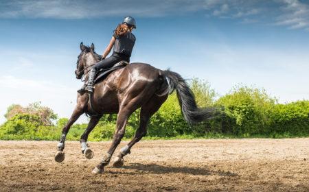 les arthropathies chez le cheval expliqué par la clinique équine Equitom