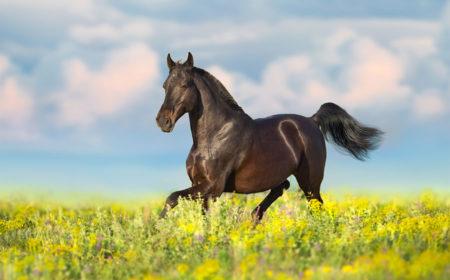 Comment gérer le stress du cheval ?