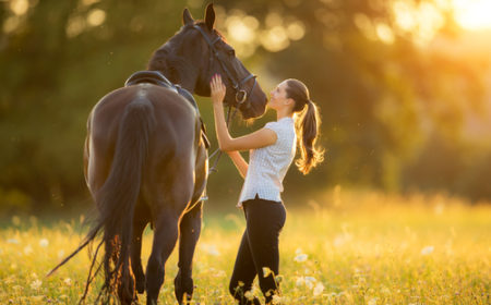 Prendre la décision de vendre son cheval