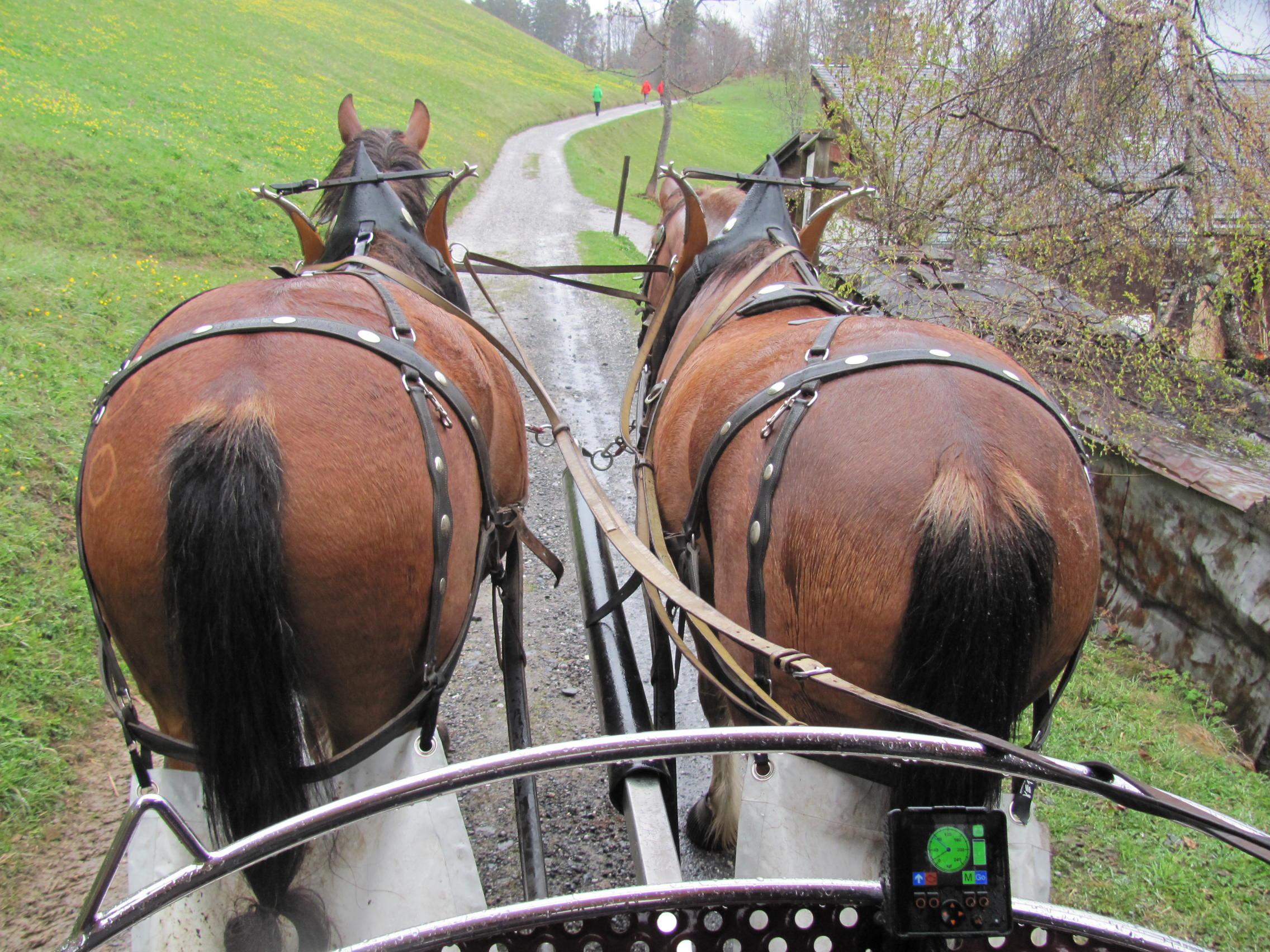 Les chemin empruntés par vhae braunwald