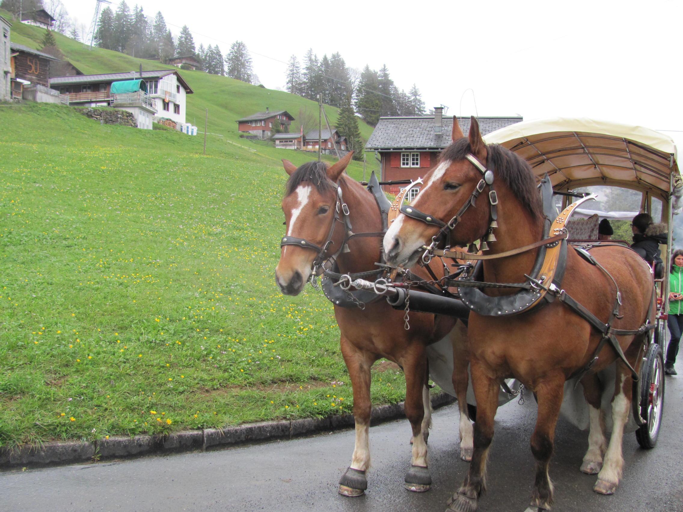 Le transport vhae braunwald pour le cheval